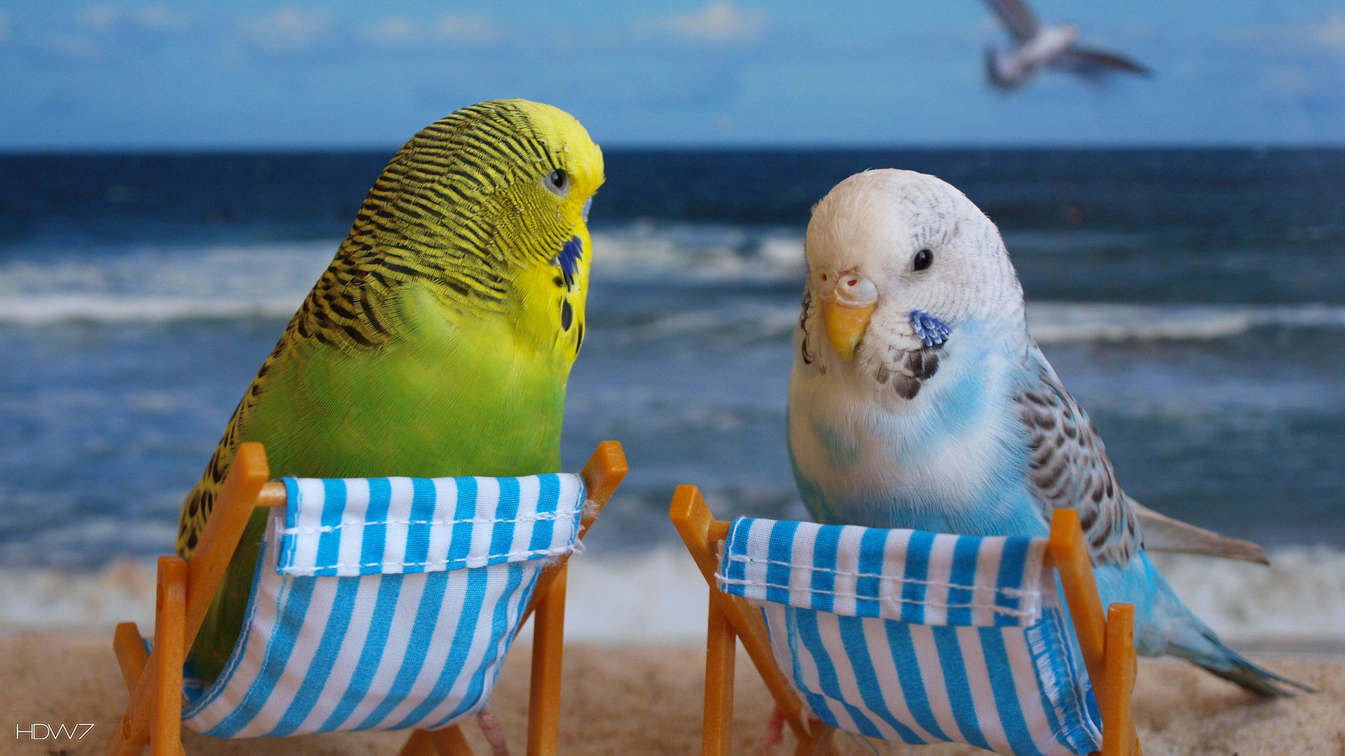 Funny+Parakeet budgie funny budgies birds beach | HD wallpaper gallery ... Running Away From Explosion Gif