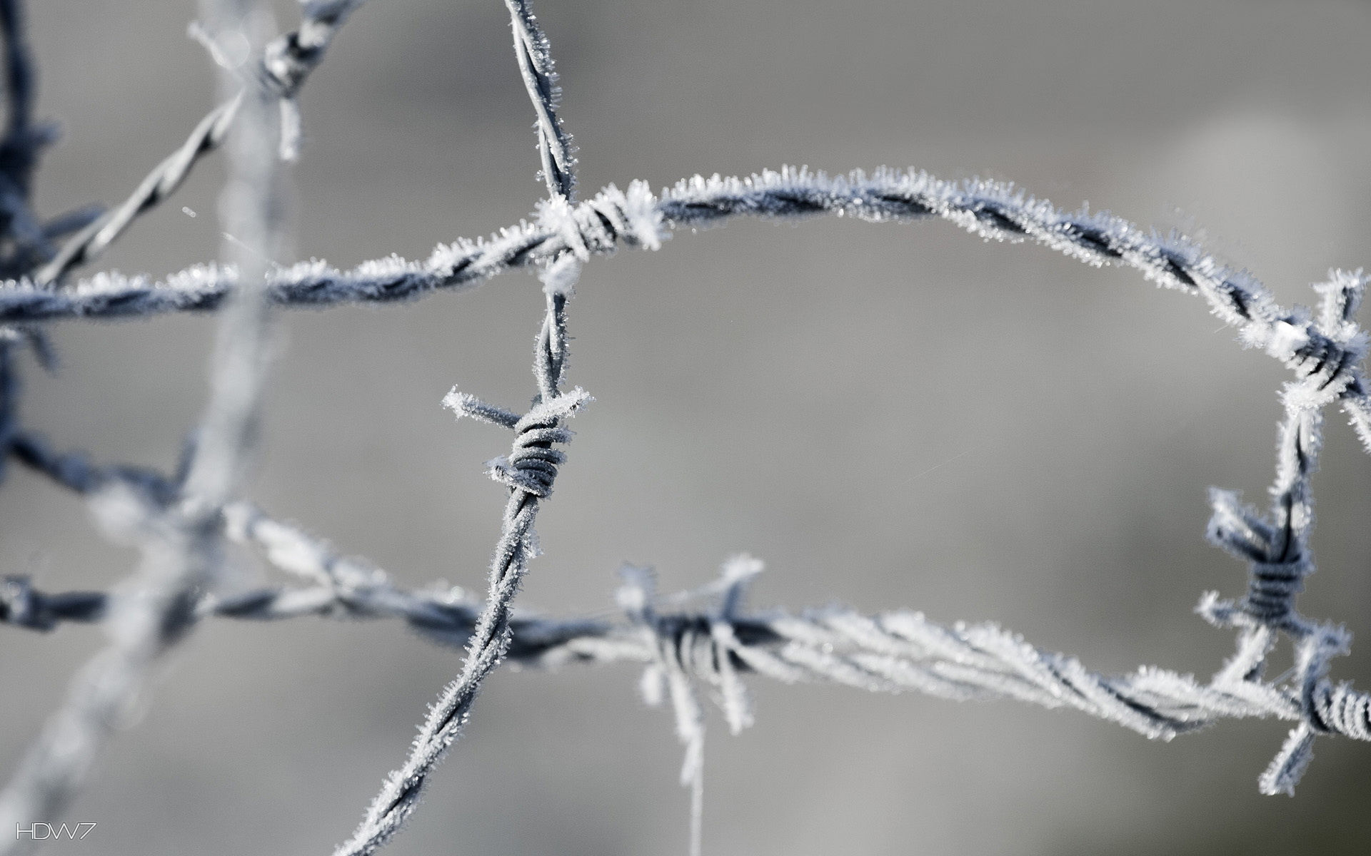 barbed wire in winter wallpaper