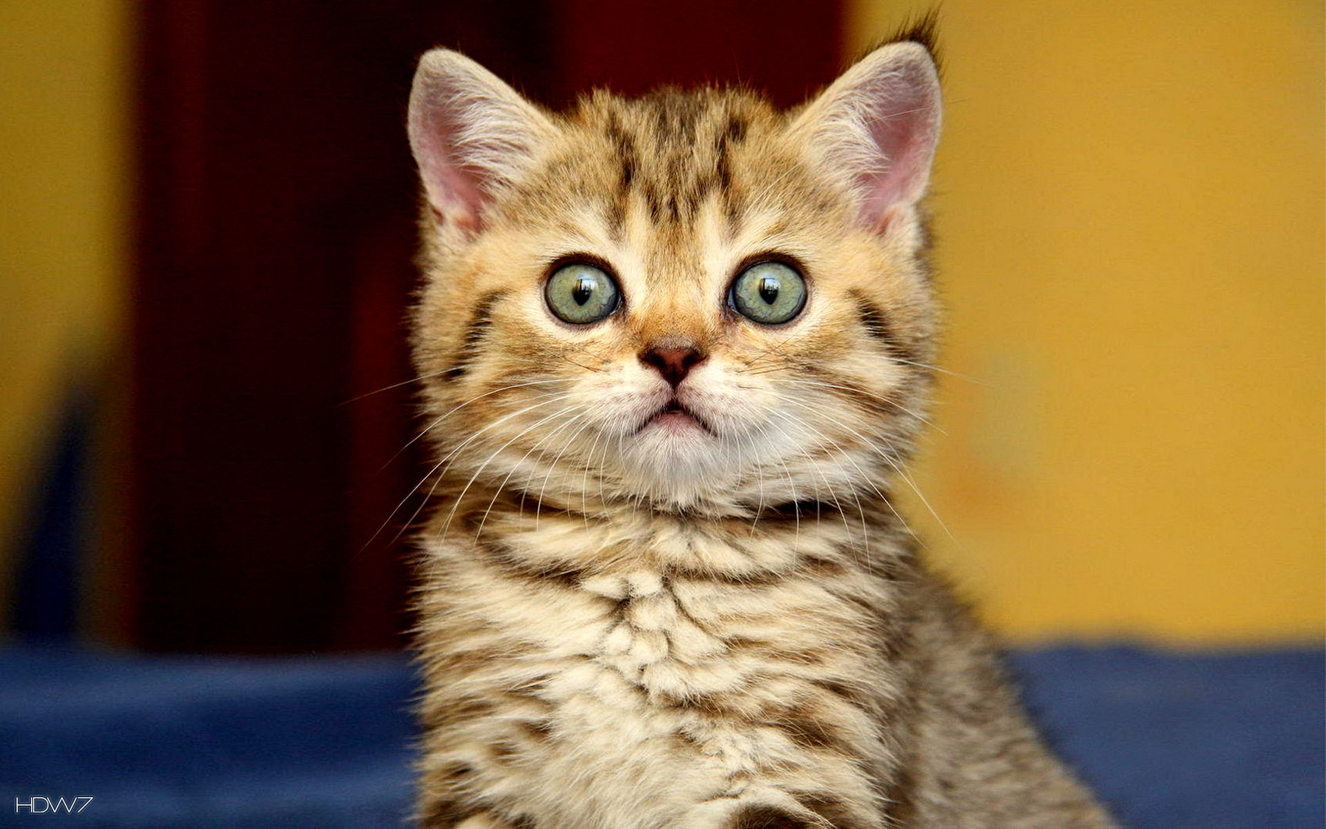 animals surprised cute kitty cat | HD wallpaper gallery #43