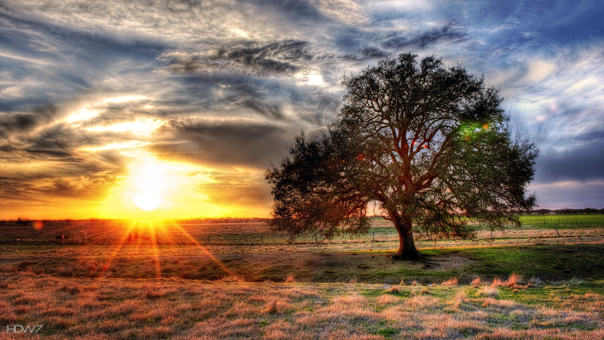 A tree with sunset in the background in hdr glory hd wallpaper a tree with sunset in the background in hdr glory thecheapjerseys Image collections